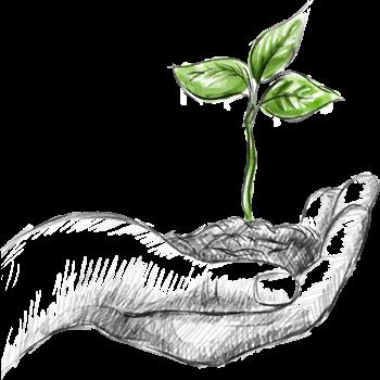 BioGoldTarim